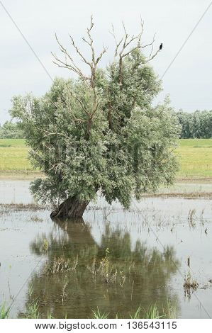 Tree coming out of the water of a swamp area next to a lake