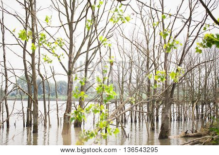 Trees coming out of the water on the side of a lake