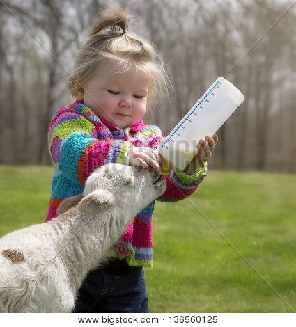 Young girl in bright colored sweater, bottle feeding orphaned lamb.