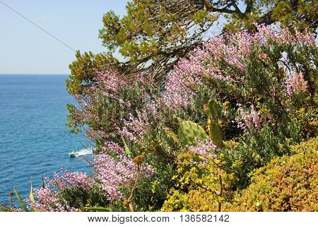 flower on the sea background, different types of flowers, cacti, mosses, flowers with purple flowers growing on a rock above the sea