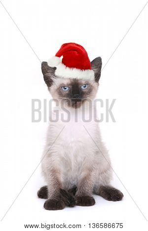 Siamese Kitten on White Looking Mad With Santa Hat