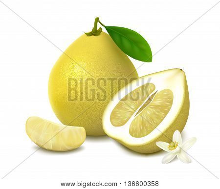 Yellow shaddock fruit with leaf, half of pomelo with white-yellow pulp, slice and flower with shadow, isolated on white background. Vector illustration.