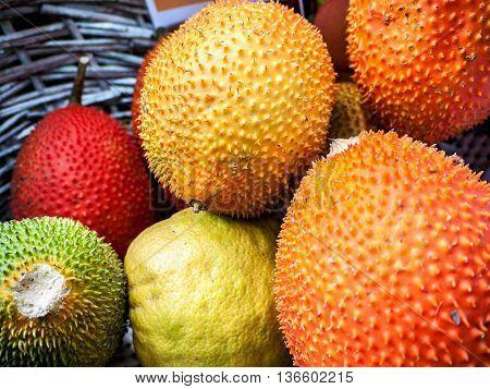 Gac Fruit Or Baby Jackfruit Cochinchin Gourd Spiny Bitter Gourd Sweet Gourd (Momordica cochinchinensis)