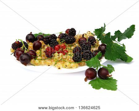 blueberries currants gooseberries mulberry on a white background photo for micro-stock