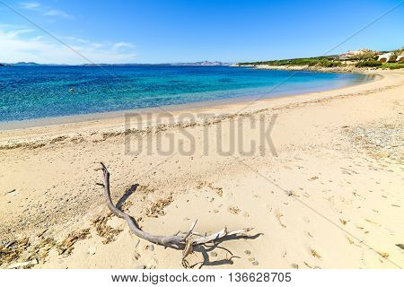 driftwood in Cala del Faro in Costa Smeralda Italy