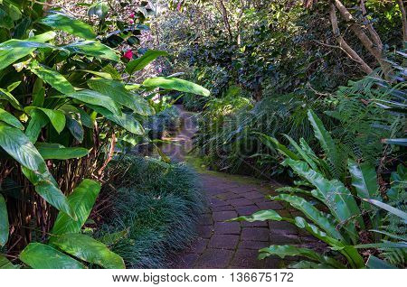 Bended path in tropical garden surrounded with exotic plants and camellia flowers. Camellia gardens Sutherland Shire Australia