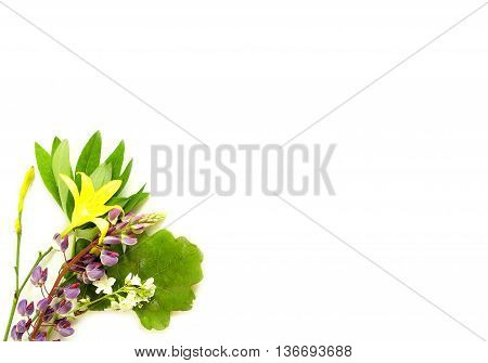 solstice midsummer herbs flowers on white background