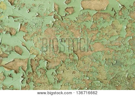 Cracked Wet and Peeling Green Paint Wall Texture