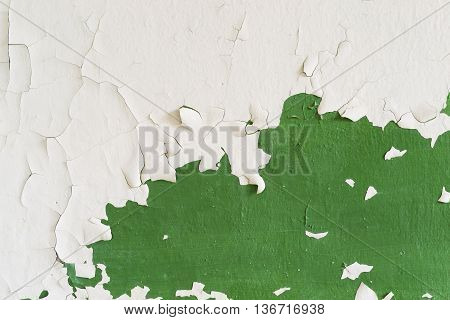 Abstract texture. Old white and green peeling painted wall.