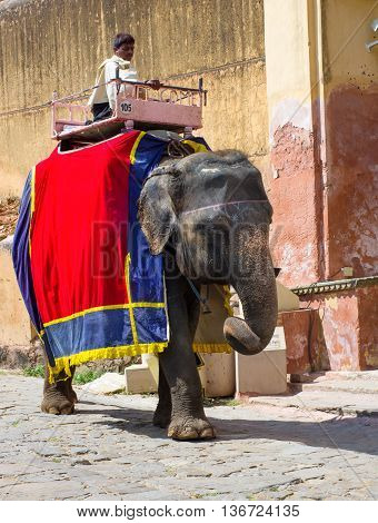 Decorated Elephant Carry Driver  In  Amber Fort