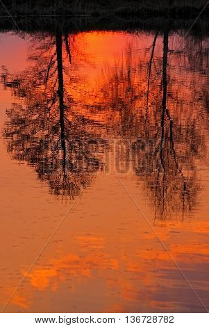 Trees reflected in lake surface at sunset