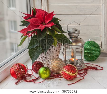 Poinsettia (Euphorbia pulcherrima) Christmas decorations in the window on the eve of Advent