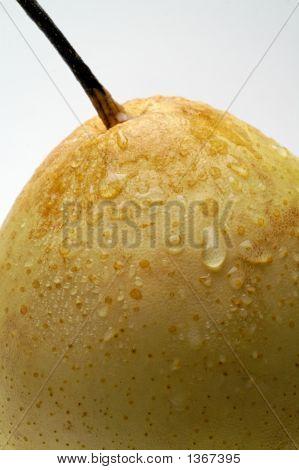 Nashi (Chinese) Pear Closeup