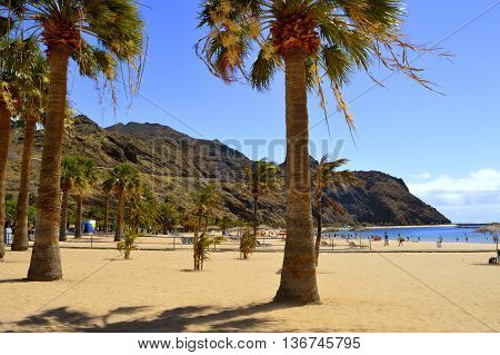 Playa De Las Teresitas beach Tenerife Canary Islands Spain Europe - June 14 2016: Palm trees on Playa De Las Teresitas beach