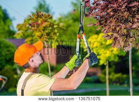 Summer Garden Works. Caucasian Gardener with Garden Scissors Trimmers at Work in His Backyard Garden.