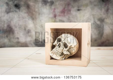 still life. The skull in wood box on wood background