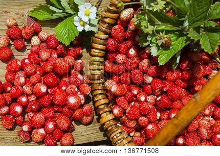 Red fragaria or wild strawberries, wild trawberry. Basket with fresh wild strawberries