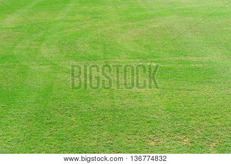 Greensward field background and wallpaper, landscape wallpaper