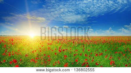 field with poppies and sun on blue sky