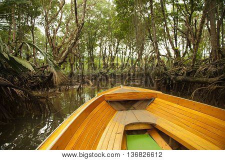 Mangrove forests with Stream in Borneo , Mangrove tree with a small river mage has grain or blurry or noise and soft focus when view at full resolution.