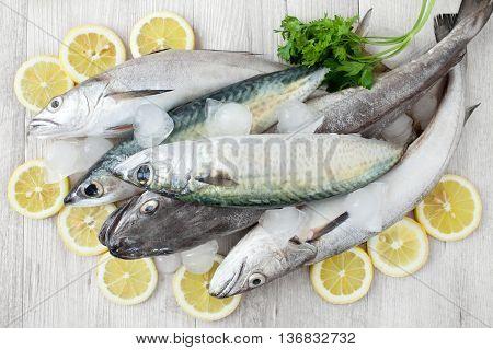 Mackerel And Codfish