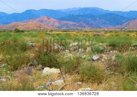 Sagebrush and chaparral plants with Mt San Gorgonio beyond taken in Cabazon, CA