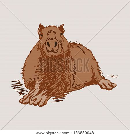 Graphic image large water rodent. Colored drawing - capybara brown. Vector illustration