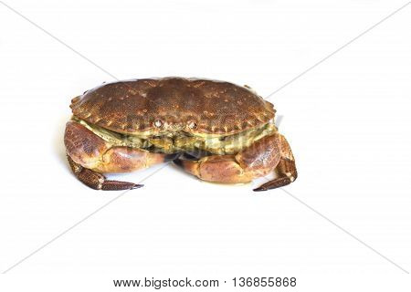 Raw crab isolated on a white background.