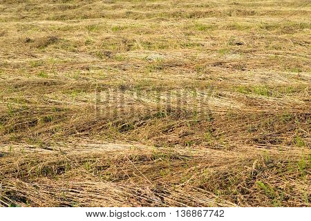 Mown grass on the field may be used as background.