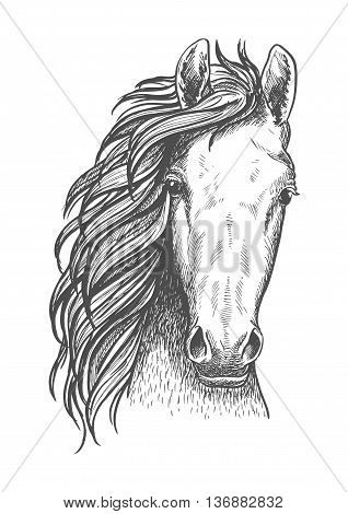 Wild mustang isolated sketch symbol for wildlife theme or t-shirt print design usage with close up portrait of a head of american free-roaming or feral horse.
