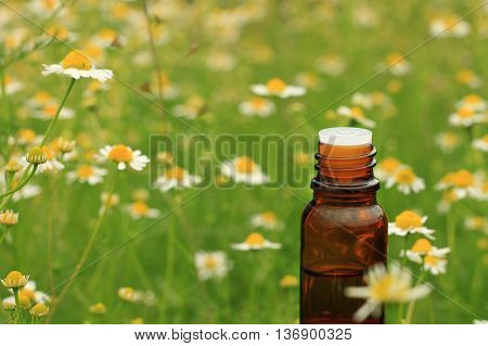 Chamomile extract. Glass bottle essential oil, apothecary camomile background. (Focus on foreground bottle, flower field in natural blur).