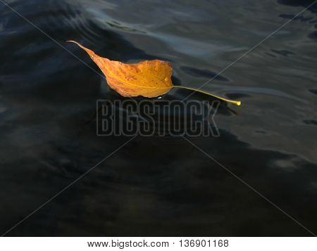 Yellow autumn leaf on the water surface driven by the wind.