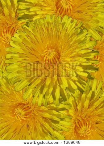 Beauty Of Dandelions