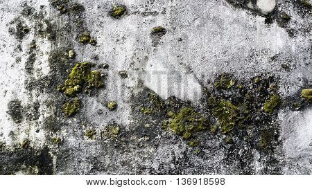 Grunge old condition wall texture background with moss