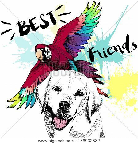 Vector hand drawn concept of labrador retriever and ara macaw frienship. Color hand drawn domestic dog and wild exotic parrot illustration. Best friends.