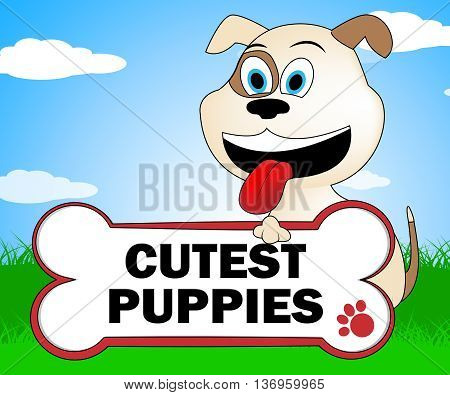 Cutest Puppies Indicates Lovable Purebred And Lovely Dog