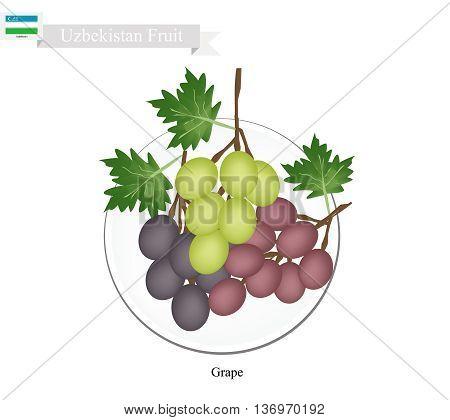 Uzbekistan Fruit Ripe and Sweet Grape. One of The Most Popular Fruits of Uzbekistan.