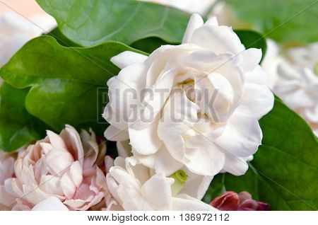 Jasmine (Other names are Jasminum Melati Jessamine Oleaceae Jasmine) flowers grouped on wooden board background
