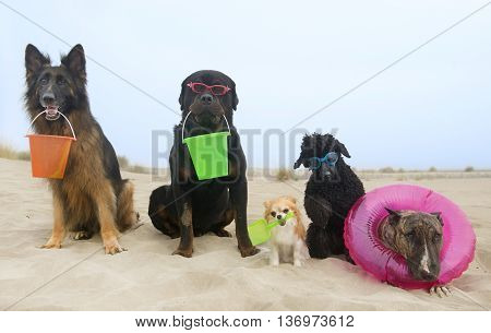 five dogs resting on a beach in summer