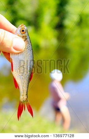nice rudd caught in hand and fisherman in the background