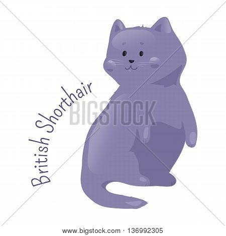 British blue shorthair cat isolated. Pedigreed domestic mamal with distinctively chunky body, dense coat and broad face. Part of series of cartoon kitten species. Child fun pattern icon. Vector