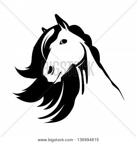 Head of the cute horse with beautyful mane isolated on white