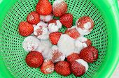 Bright, red strawberries covered by white mold. Spoiled, rotten berries poster