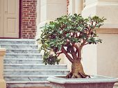 Sturdy bonsai tree in the pot, Retro color filter poster