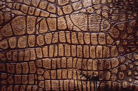 natural crocodile leather, skin texture close up