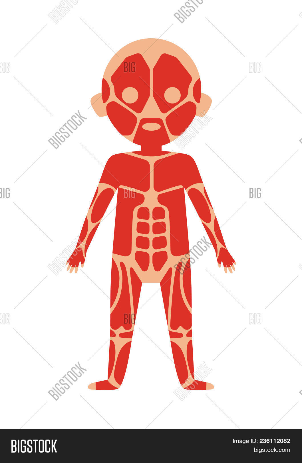 Boy Body Anatomy Image Photo Free Trial Bigstock