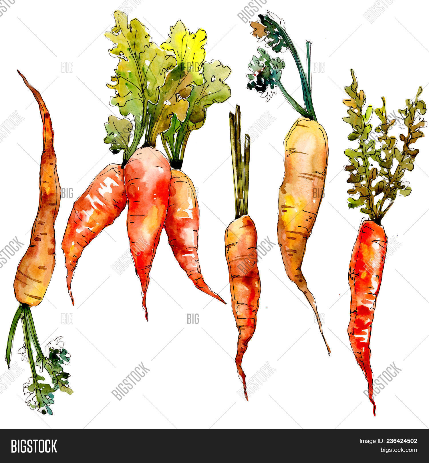 Carrot Healthy Food Image & Photo (Free Trial)   Bigstock