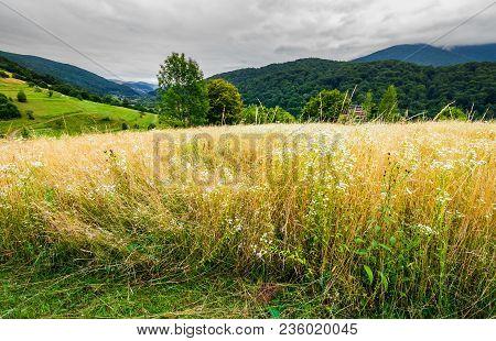 Rural Field On Hillside In Mountains. Lovely Rural Landscape