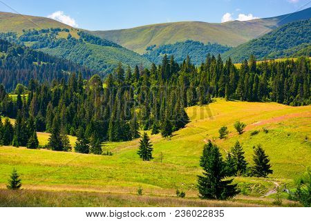 Forested Hills Of Borzhava In Summer. Beautiful Landscape In Mountainous Area Of Carpathians, Ukrain