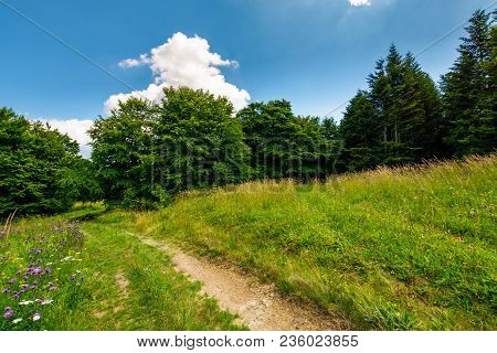 Footpath Trough The Glade In Forest. Lovely Summer Nature Scenery